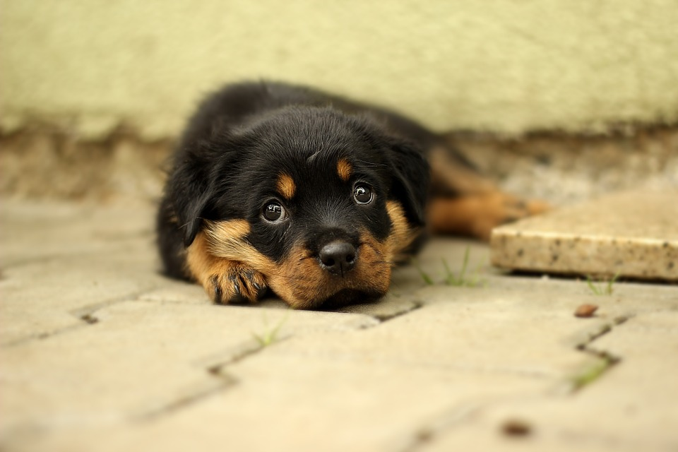 How to Choose the Right Dog Breed for Your Family